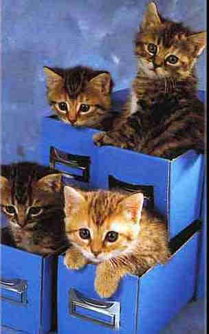 kitties_in_box.jpg